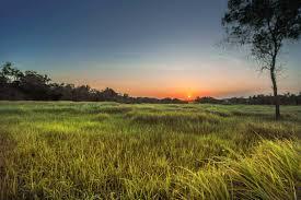 grass field sunrise. Brilliant Sunrise Similar Photos With Grass Field Sunrise