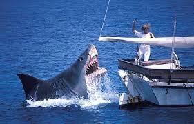 shark attack wallpaper.  Shark Jaws Images Another Ridiculous Shark Attack Wallpaper And Background Photos Inside Wallpaper N