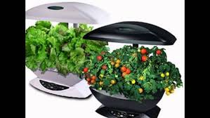 where to indoor herb garden kit