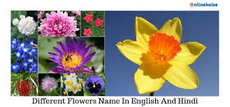 list of diffe flower names