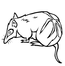 Small Picture Bandicoot Animal Coloring Pages Crash Bandicoot Coloring Pages