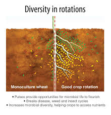 environmental sustainability pulse  growing pulse crops in a rotation other crops enables the soil environment to support these large diverse populations of soil organisms