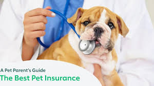 If it is morally wrong to cause animals to suffer then experimenting on animals produces. The Best Pet Insurance Companies A Pet Parent S Guide