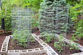 backyard vegetable garden house design with raised garden beds cinder blocks and wire mesh trellis ideas