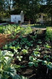 how to start a small garden. Don\u0027t Try To Plant A Large Garden During Your First Year Of Growing Vegetables How Start Small G