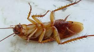 Отряды насекомых их виды строение и размножение Создан робот имитирующий движения насекомых