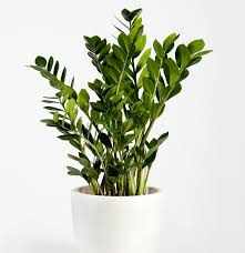 Extremely Low Light Plants 14 Hardy Houseplants That Will Survive The Winter