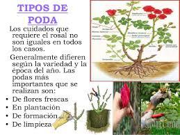 Espores  JULIO JARINEROCuidados De Los Rosales