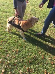 Das tier knickt beim laufen weg, kommt nicht mehr alleine in den stand und kann auch keine treppen mehr steigen. Ausverkauft Medizinische Tragehilfe Hundetrage Fur Hunde Von 25 45 Kg Dog Carrier