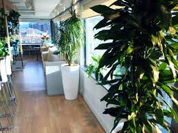 modern office plants. Stripe\u0027s Request Of Their Dublin Office For Plants Rental During Our Onsite Consultation At Office, Requests Were A Fully Lush Modern