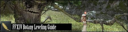 Ffxiv Xp Chart Ffxiv Botanist Leveling Guide 80 Shadowbringers Updated