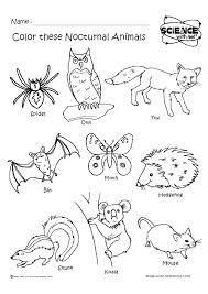 Kindergarten Worksheets Animal Habitats Inspirational Best Nocturnal ...