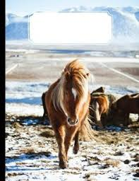 shetland pony in snow blank journal notebook pony breeds gifts for horse