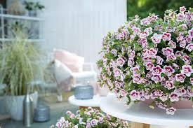 easy plants to grow in pots
