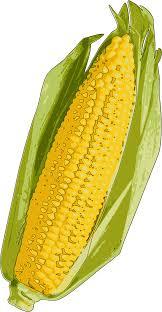 ear of corn clipart. Exellent Corn Corn In Ear Of Clipart O