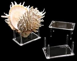 Seashell Display Stands