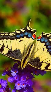 Butterfly, little purple flowers ...