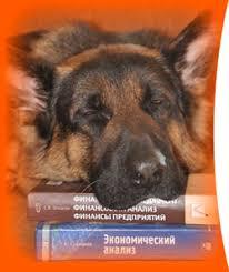 Дипломная работа на заказ от автора в Санкт Петербурге Заказать  Дипломные работы от автора на заказ в СПб
