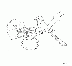 bird in the nest coloring page pitara kids network
