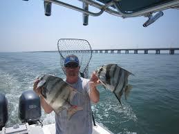 Chesapeake Bay Fish Identification Chart Fish Species Of The Chesapeake Bay Finao Sportfishing