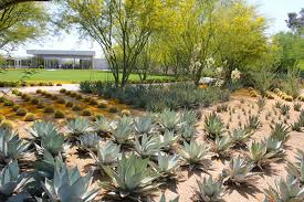 Small Picture How To Design A Succulent Garden Markcastroco