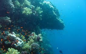 underwater ocean wallpapers. Exellent Wallpapers Download And Underwater Ocean Wallpapers 0