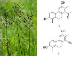 Phenanthrenes from Juncus atratus with antiproliferative activity ...