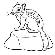 Small Picture Image detail for Striped squirrels Coloring Pages Chipmunk