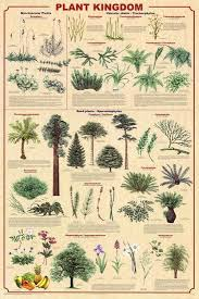 Plant Chart Plant Kingdom 2 Educational Science Chart Poster