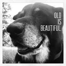 Image result for old dog getting up in morning