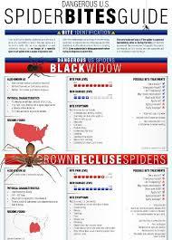 Spider Bite Identification Chart Pictures 61 Conclusive Spider Bites Identification Pictures