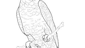 Dog And Bird Coloring Pages Pet Free Sheet Parrot Picture For