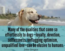 Dog Quotes Love And Loyalty Enchanting Pin By BuffK48 Dog Supplements On Dog Quotes Pinterest Dog And