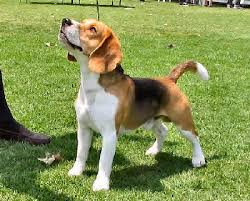 family canidae types of dogs how to pick a dog