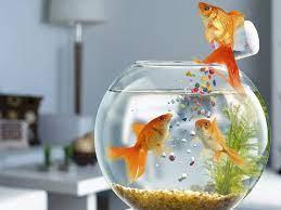 3d Koi Fish Wallpaper Hd 3d Fish ...