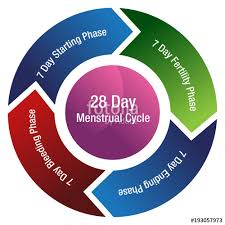 Period Cycle Pregnancy Chart
