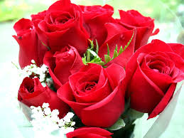 Roses Flowers Wallpapers White Red Roses Flowers Gift Box Flower Wallpaper Iphone 5 Lovely
