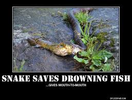 drowning_snake.jpg via Relatably.com