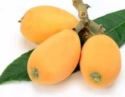Native Trees For Missouri LandscapesFruit Trees For North Florida