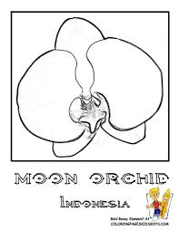 Wwwyescoloringcom Images Flowers72moon Orchidindonesiacoloring