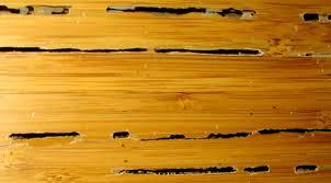 image of bamboo hardwood floor termite damage