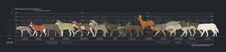 Horse Size Comparison Chart Wolf Size Comparison Chart Dire Wolf Size Maned Wolf