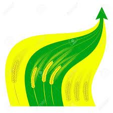 Wheat Growth Chart Farming Agriculture Grain Harvest Growth Price Growth Grain