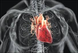 Tác động giữa thuốc điều trị bệnh tim mạch và bệnh hen