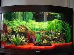 aquarium decoration ideas home decor pictures diy fish tank decorations brilliant best great decorating winsome