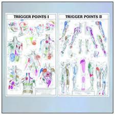 Shoulder Trigger Points Chart Trigger Points I And Ii Anatomical Chart
