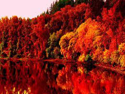 Fall Leaves Wallpaper HD, Autumn HD ...