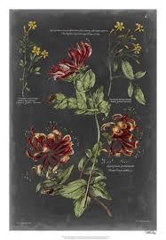Botanical Chart Print Vintage Botanical Chart Ii