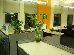 feng shui plants for office. feng shui plants for office