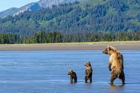 Hike through the mountains, or venture out on a deep sea fishing or whale watching excursion. Erleben Sie Alaska Auf Einer Autorundreise Canusa